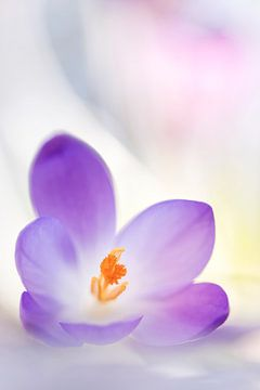 Purple van Bob Daalder