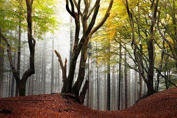 Arty arbres dans le Speulderbos sur Rob Visser