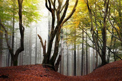 Kunstige bomen in het Speulderbos