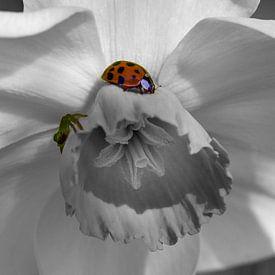 Kleine Blumenbesucher von Ursula Di Chito