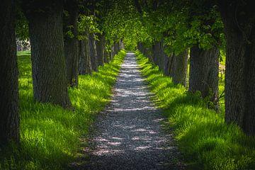 Chestnut Avenue van Steffen Gierok