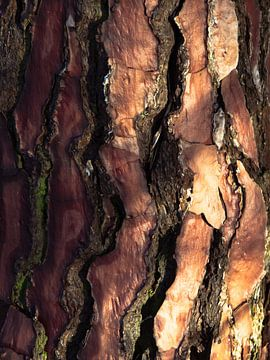 Écorce d'arbre