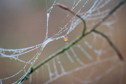 De druppels van de dauw kleuren de draden van de spinnenwebben in