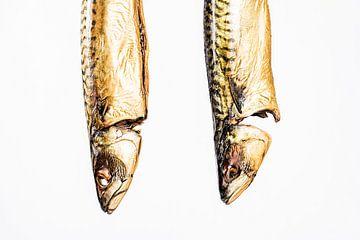 Zwei Makrelenköpfe von MICHEL WETTSTEIN