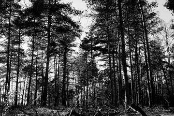 Schwarz-Weiß-Landschaftsfotografie - Naturreservat Hoge Veluwe von Linsey Aandewiel-Marijnen