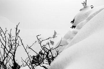 Chèvres de montagne dans la neige dans les Alpes sur Hidde Hageman
