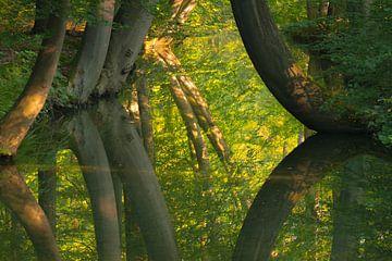 De kromme bomen van de Twickelervaart van Ron Poot