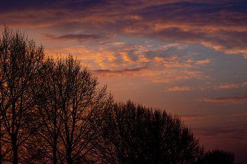 Silhouetten von kahlen Bäumen gegen die sonnenbeschienenen Wolken während des Sonnenuntergangs von Anne Ponsen