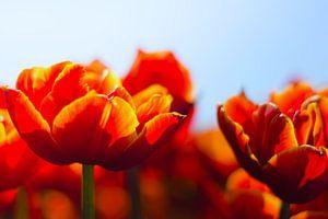 Colours of the spring van Tonny Eenkhoorn- Klijnstra