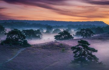 Het Paarse Heidegebied