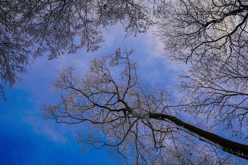 blauwe hemel van Anna Heisig