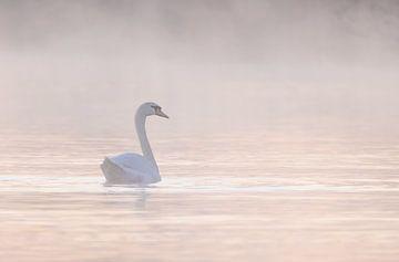zwaan in de mist van natascha verbij