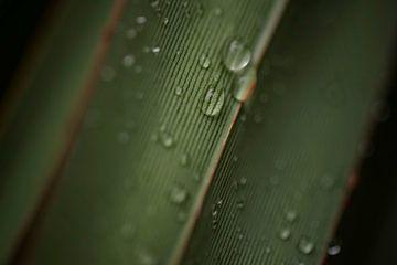 Blad met waterdruppels en lijnen von Leon Doorn
