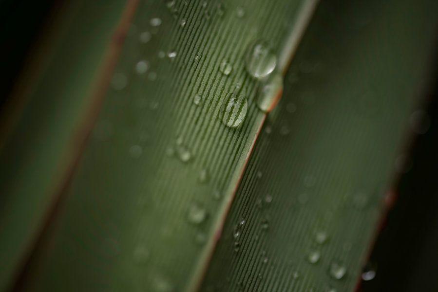 Blad met waterdruppels en lijnen van Leon Doorn