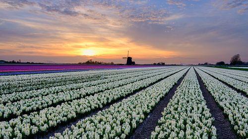 kleurrijk bloemenveld van
