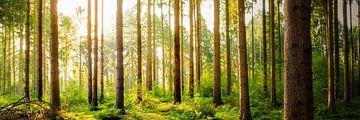 Vom Sonnenlicht durchfluteter Wald von Günter Albers