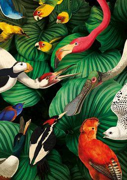 Teylers Museum Vogelparadijs, Studio Wesseling van Teylers Museum