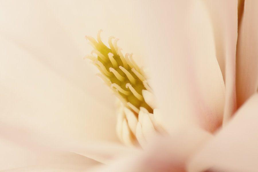 Magnolia van LHJB Photography