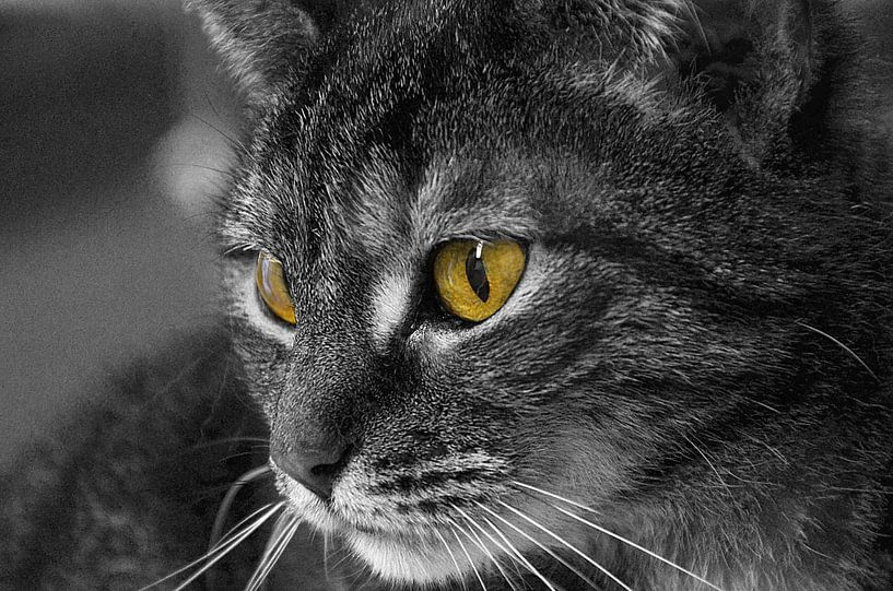 Paranormale kat van Lennard Deij