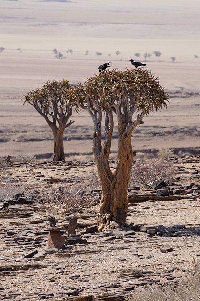 Vogels in de kokerboom van Erna Haarsma-Hoogterp