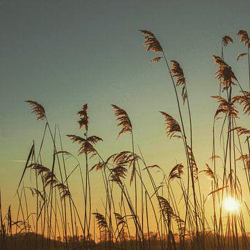 Sonnenuntergang. von Hans ter Elst