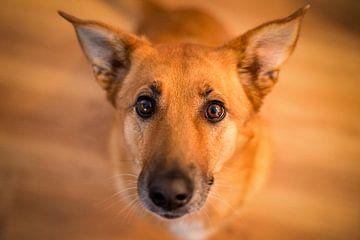 Hund sur Severin Pomsel
