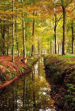 Bos in de herfst van Corinne Welp
