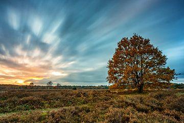 Baum in Herbstfarben. von Robin van Maanen