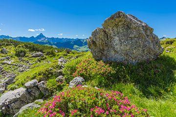 Alpenrosen von Walter G. Allgöwer