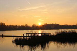 Prachtige zonsondergang achter het riet
