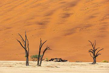 Sossusvlei Namibië (10) van Adelheid Smitt