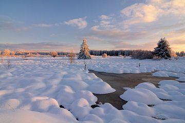 Winter in de Hoge Venen van Rolf Schnepp