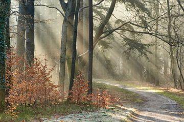 Magischer Morgen im Wald von Cor de Hamer