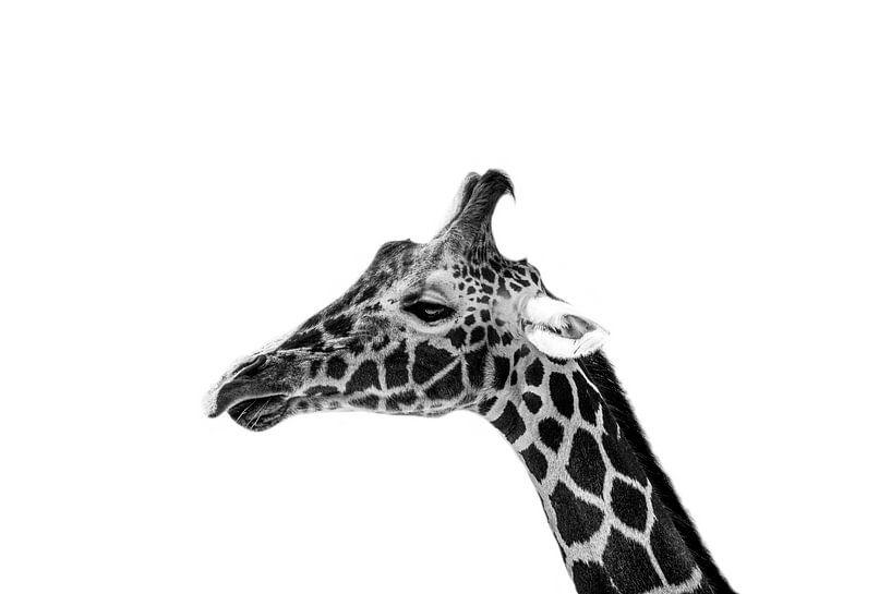 Giraffe close up van Daliyah BenHaim
