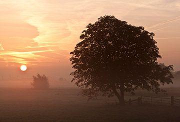 Sunset van Liesbeth Steller