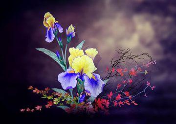 Iris flower   van Dusanka Djeric