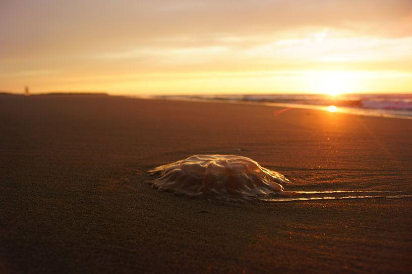 Kwal op het strand van Michel van Kooten