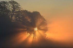 Beleuchtung von Johanna Varner