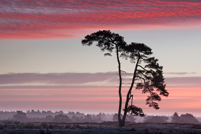 Sunrise. van Piet Haaksma