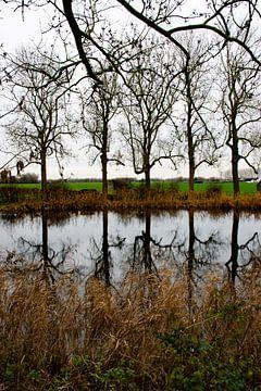 Reflections van Ingrid de Vos - Boom