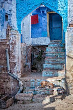 Slapende hond op blauwe trap in Jodhpur India. Wout Kok One2expose van