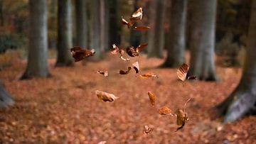 Vallende herfstbalderen. van Simon Peeters