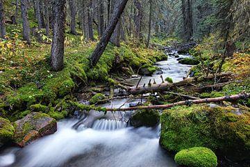 Bos en rivier in Canada van