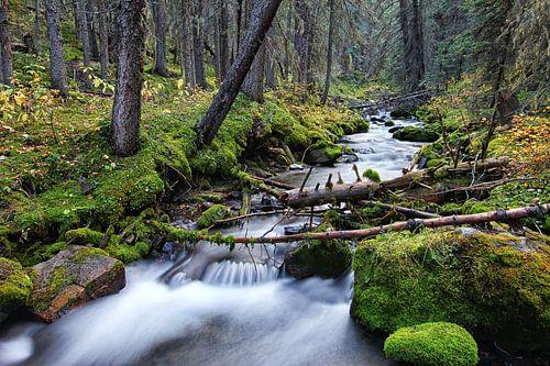 Bos en rivier in Canada von Joris Beudel