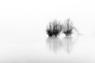 High Key Misty Trees sur Sander Grefte