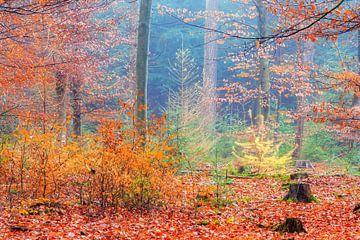 Alle herfstkleuren in het bos von Dennis van de Water