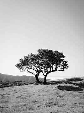 Duo - Black & White von Tim Loos