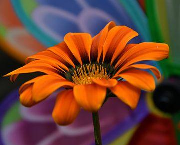 Bunte Blume, bunte orangefarbene Blume, farbe blume von J..M de Jong-Jansen