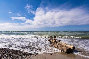 Drift wood on the Baltic Sea coast van Rico Ködder