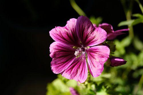 Zomerse roze bloem   Natuurfotografie